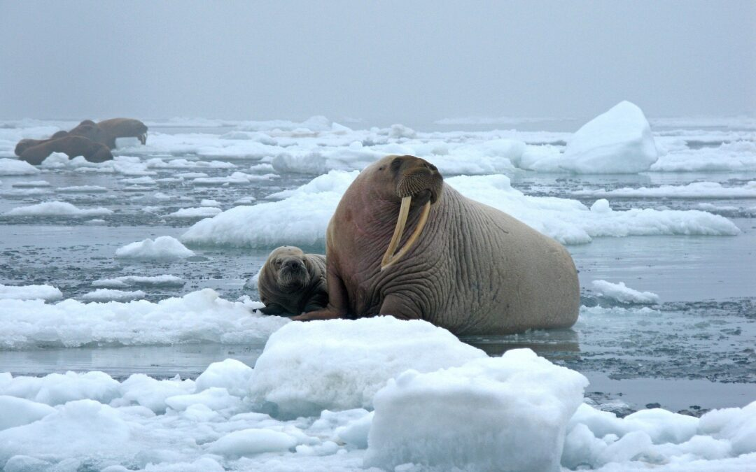 Morsowanie – 5 korzyści z kąpieli w lodowatej wodzie.