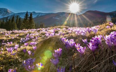 Jak wiosna wpływa na nasze zdrowie?